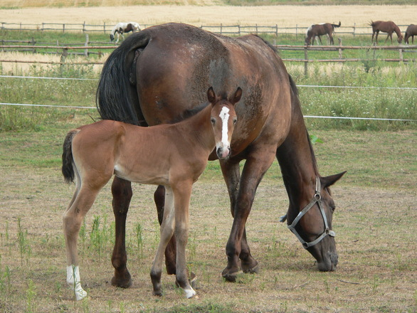 pet health supplements horse and foal